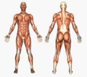 muscular imbalance 2