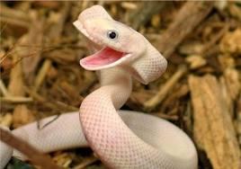 defanged snake
